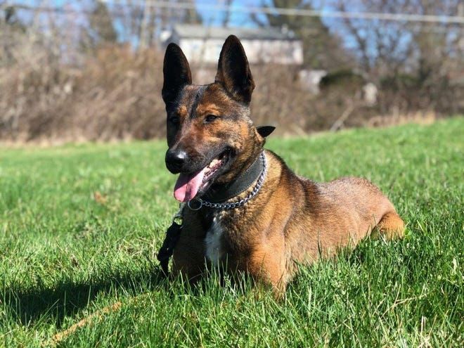 A nonprofit organization plans to donate a bullet and stab protective vest forCrawford County Sheriff's Office K-9, Nora.