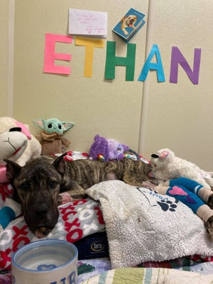 Ethan returned to the Humane Society on Wednesday after spending several nights at the animal hospital.