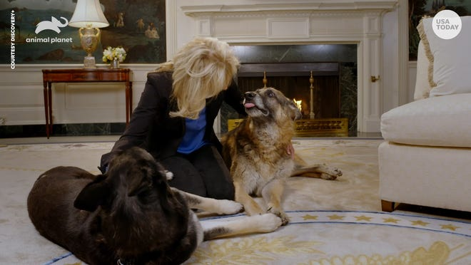 First Lady Jill Biden encouraged people to wear masks when walking their pets in a PSA that will air during the Puppy Bowl.
