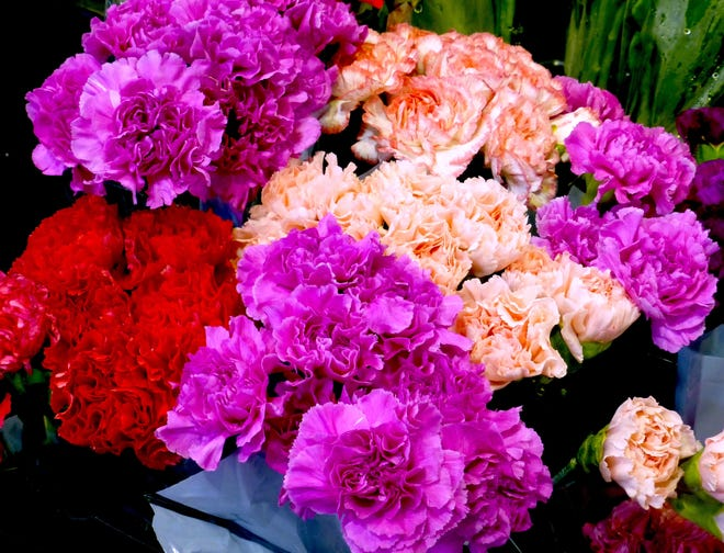 Charming, spicey, fragrant carnation Valentine bouquets convey deeper meanings with their color. Clockwise from bottom, purple expresses capriciousness; red, deep love; and pink, Mother's love.