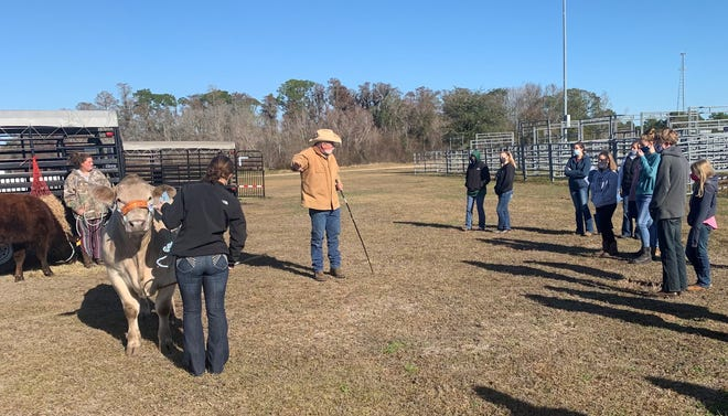 Dr. Todd Thrift, professor in animal sciences at the University of Florida, gives an educational program on beef cattle management to Flagler County 4-Hers.