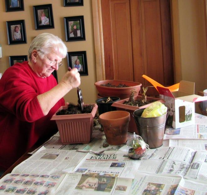 Susan planting a few bulbs from a past season.