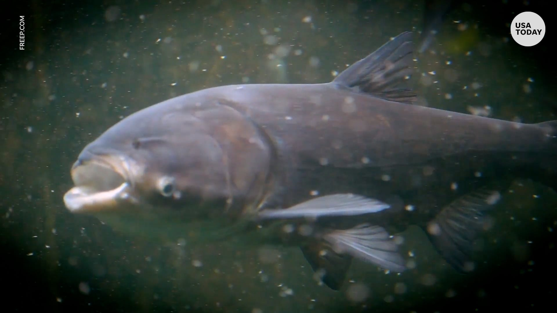 Fish will get new name to appeal to eaters