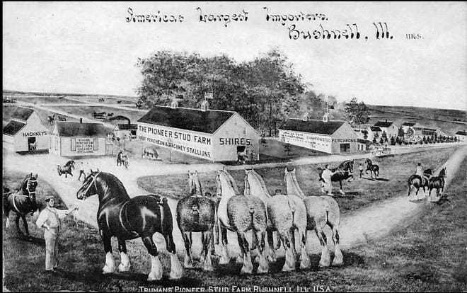 Known as America's largest horse importer, the Truman Pioneer Stud Farm near Bushnell lost one of its valued employees when he was drowned at sea in April 1912.