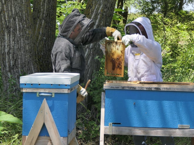 Jorge Garibay and Chris Humistan collect honey on Jack Mull's 400-acre game preserve in Sterling where Garibay built 16 hives.