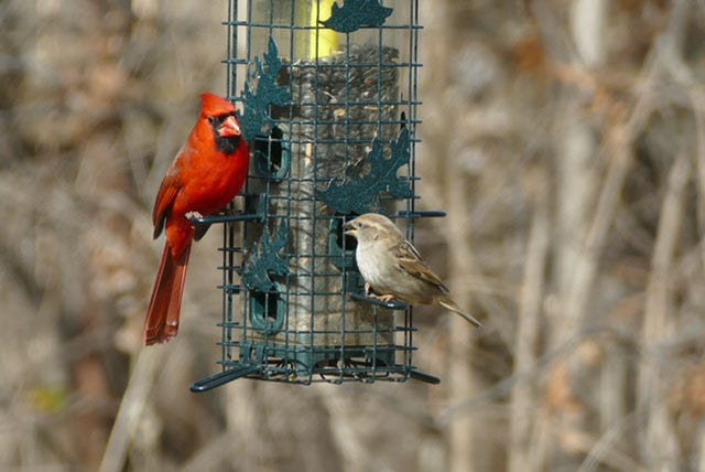 Sharing the feeder