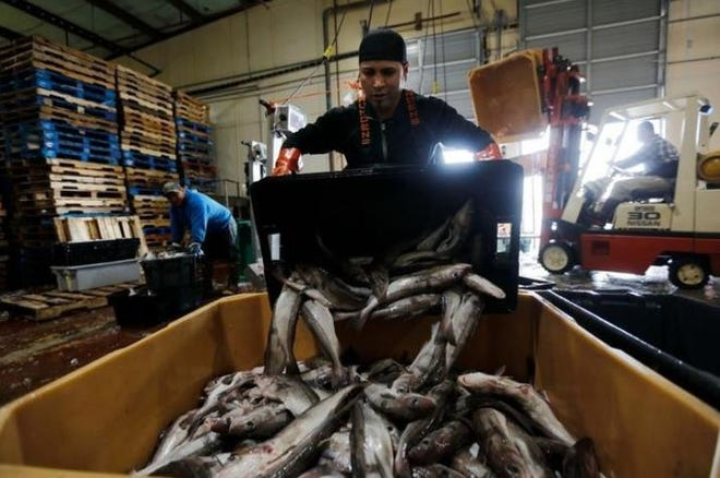 A worker unloading fish at BASE in New Bedford.