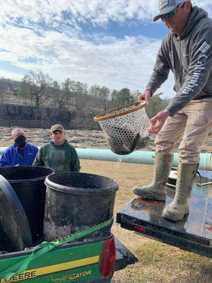 "The rainbow trout released into Black Creek were no 'pups,"" Frank Roden of the Rainbow Fly Fishing Club said. The fish were 12- to 16-inch 'trophy trout,' he said."