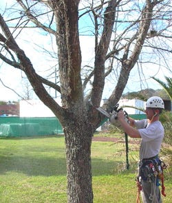 Hiring an arborist is a worthwhile investment.