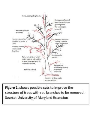 Tree pruning diagram.