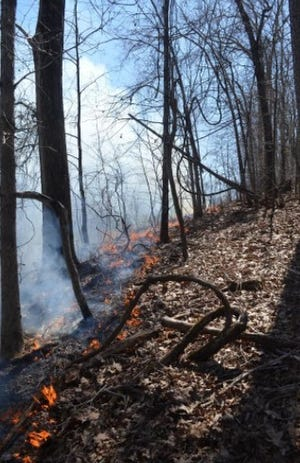 Prescribed burns, like this one on Crowders Mountain in 2019, are conducted to prevent wild fires and promote new vegetation growth.