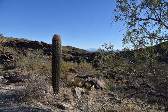 The view from the Dirt Road Trail in South Mountain Park/Preserve in Phoenix.