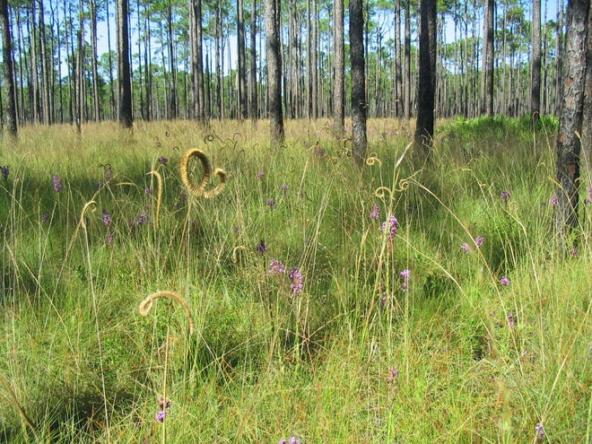 """Apalachee Audubon Society will feature a virtual event on  """"Pines to Palms"""" on Feb. 18."""