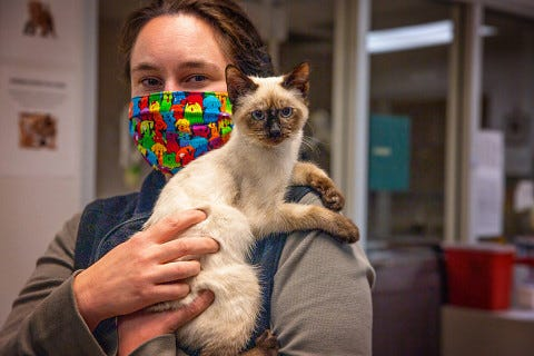 February is recognized as National Cat Health Month