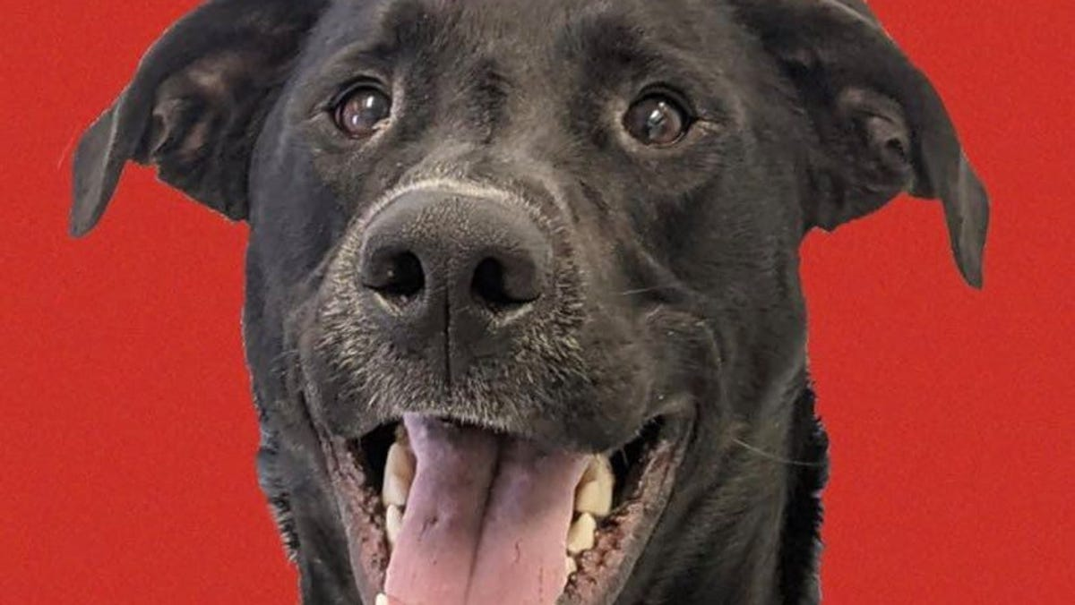 Adopt a valentine: Shelter dogs seeking perfect matches