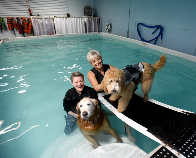 Healing Waters Canine Experience