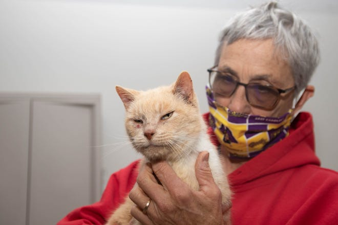Pam Schiller holds Valentina, an abandoned cat she rescued from feral cats who were driving it away from their colony. [Bill Hand / Sun Journal Staff]