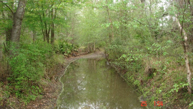 Paraner's Trail in Oleno State Park, Columbia County, reveals the size and bad conditions that a traveler might face on the Old Spanish Trail.