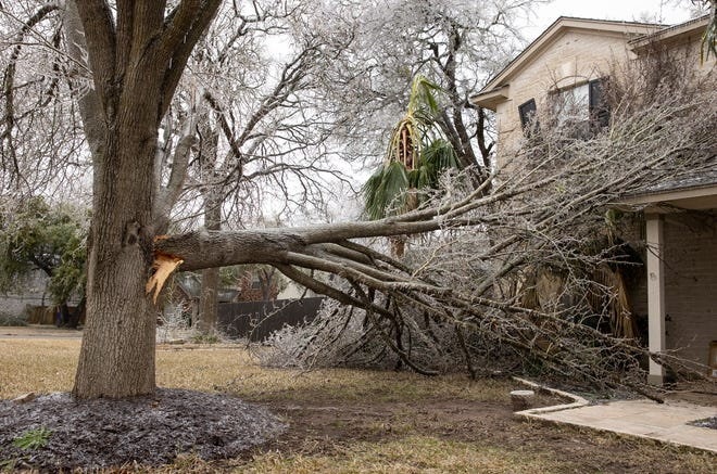 Part of a tree fell onto a house on Little Elm Trail after an ice storm on Friday February 12, 2021.