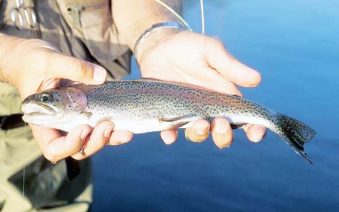 March 1 marks the annual opening of catch-and-keep trout fishing in Missouri at the state's four trout parks.
