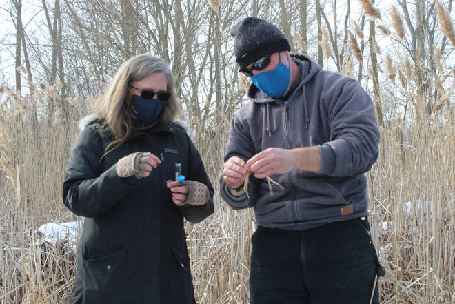 Ohio Northern University professors Robert Verb and Kat Krynak collected plant life samples Thursday at the Sandusky County Park District's Blue Heron Reserve. An ONU freshwater ecology class of 11 students visited the park. The university and the park district are partnering for a fen restoration project at Blue Heron. A fen is one of the main types of wetlands.