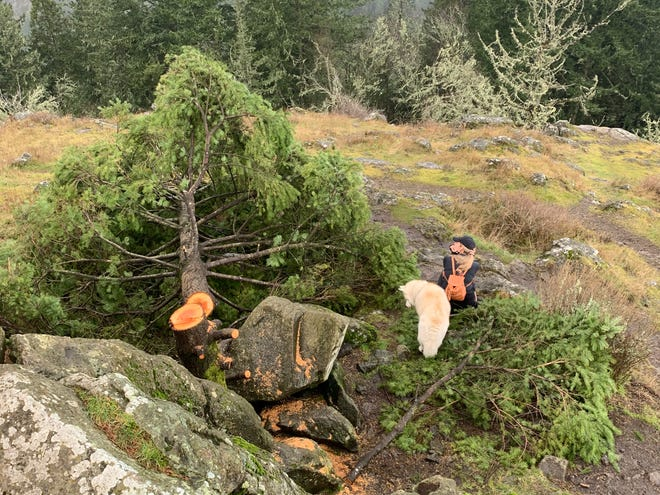 Summer Beck and her dog, Koda, sit beside a tree Feb. 13 at the top of Spencer Butte cut down in an apparent act of vandalism.