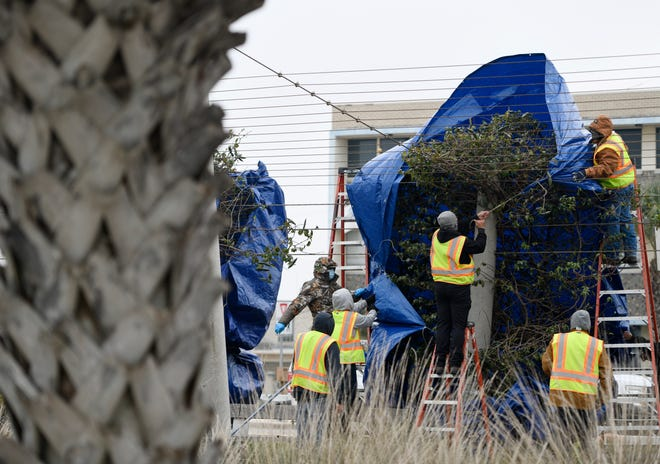 Corpus Christi Parks and Recreation employees cover trees in Bayfront Park ahead of the weekend winter weather, Saturday, Feb. 13, 2021. According to the National Weather Service, the a winter storm watch is in effect from Feb. 14 until Feb. 15.