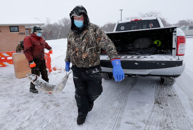 Wisconsin Department of Natural Resources fisheries technician Ron Rhode, left and fisheries technician Tom Schlavensky collaborate to carry a large sturgeon to a fisherman's truck during the 2021 sturgeon spearing season on Lake Winnebago Saturday, Feb. 13, 2021, near Stockbridge, Wis.