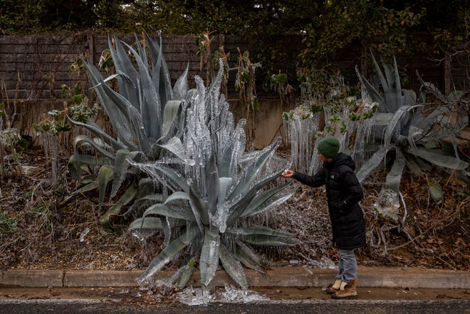 Carolina Velez looks at frozen agave plants on East Side Drive in Austin on Sunday. A winter storm warning is in effect until noon Monday for Central Texas, including Travis, Hays, Williamson, Bastrop and Caldwell counties.
