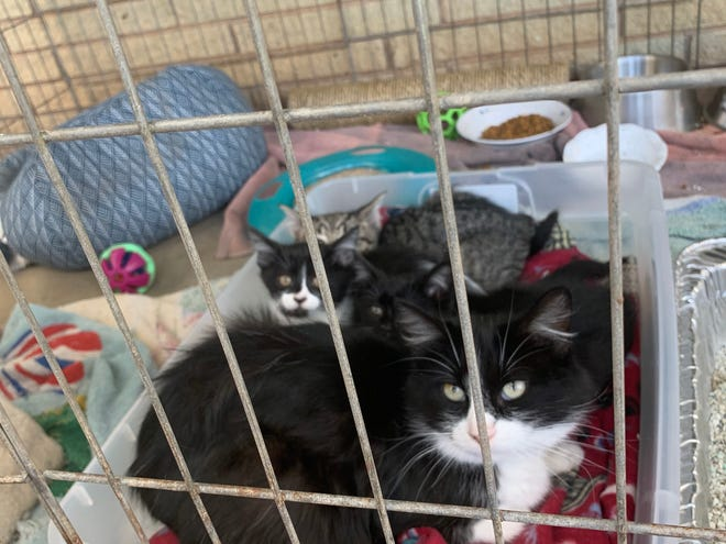 ARC Cats: The Animal Rescue of Shawnee also rescued this cat and her kittens from the flap in a fifth wheel camper.