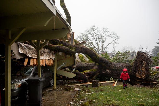Athena Quijano, 4, walks around her front yard Sunday where a tree crushed the carport and cars on Camellia Drive South in Salem. Homeowner Sean Quijano said he watched the tree come down while his family was home around 7 a.m. Friday.