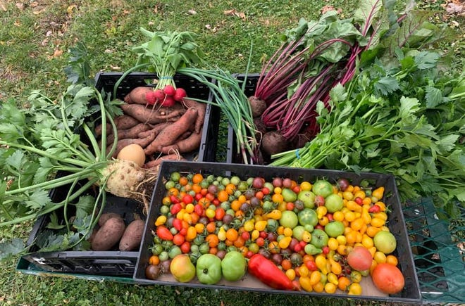 Peppers and onions do well in colder weather, while tomatoes, shallots and carrots are among the many veggies that can be grown in containers indoors.