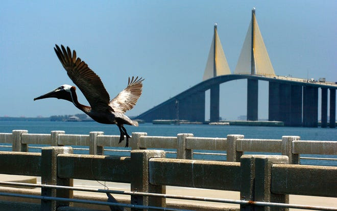 The South Skyway Fishing Pier is the focus of concerns about Pelican mutilation.