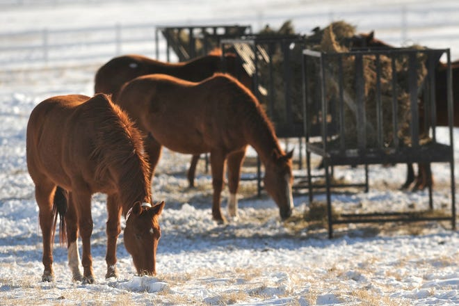 Frigid weather can hold many perils for horses, including incidences of colic.