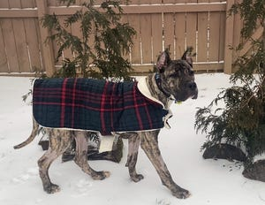 Ethan was able to enjoy the snow while spending a few days with Kentucky Humane Society volunteers at their home.