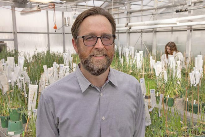 Esten Mason joined CSU's department of soil and crop sciences last August, and officially moved into the role of chief wheat breeder at the beginning of the year. Mason described how modern wheat evolved from ancient grains and talked about the work being done to improve on it during a presentation at the recent UCCS Heritage Grain School Forum.