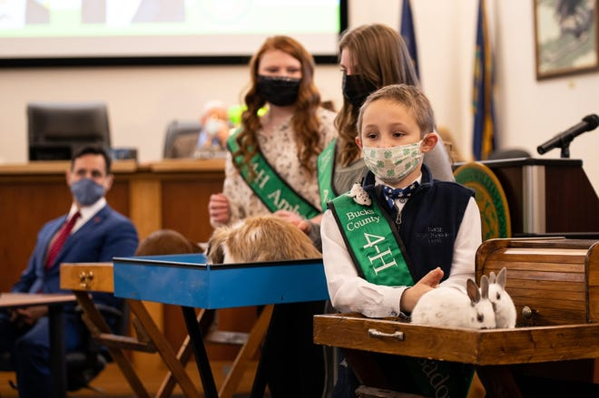Austin Stutler, 8, shows off his as-yet-unnamed 3-week-old English spot rabbits while Addison Marriott, left, 13, and Taralyn Sinn, 14, show their rabbits at the Bucks County Commissioners meeting Wednesday in the county Administration Building in Doylestown.