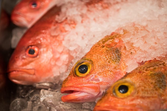 Freshly caught vermillion snapper from Ft. Pierce is displayed by Third Wind Seafood during a local vendors' meet-and-greet at The Breakers in November 2019. Third Wind will supply and operate the Tip to Tail food stand at the upcoming Delray Beach Market food hall. DAMON HIGGINS/PALM BEACH POST
