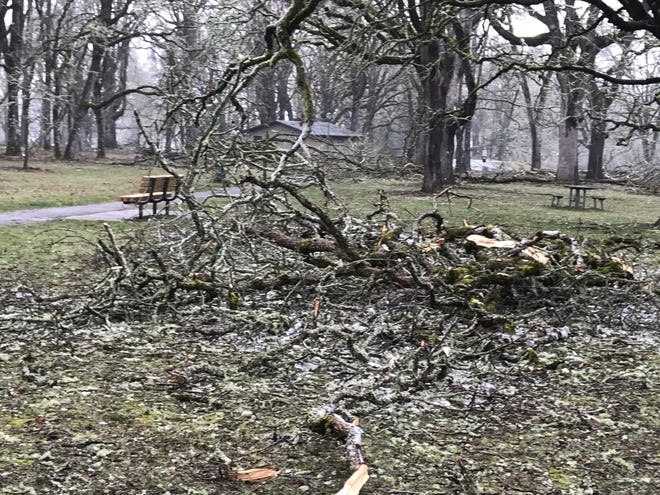 Walkers and gawkers were cautioned to watch for continued falling limbs, so huge, at Bush Park on Sunday in the wake of the ice storm.