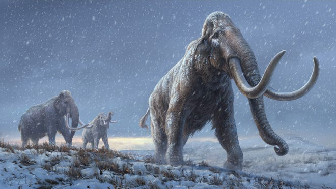 An artist's conception of ancient steppe mammoths, which preceded the woolly mammoth. The DNA was obtained from a tooth of a steppe mammoth.