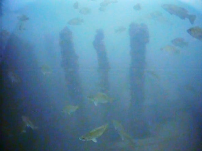 In this Aug. 17, 2015 video frame capture from a remotely operated underwater vehicle, fish are seen swimming around the shipwreck of the S.K. Martin, a coal freighter that went down in a storm on Lake Erie about two miles offshore from Harborcreek Township in 1912. The wreck is a popular diving spot and is part of an area of lake Erie local officials are seeking to have classified as a federal marine sanctuary.