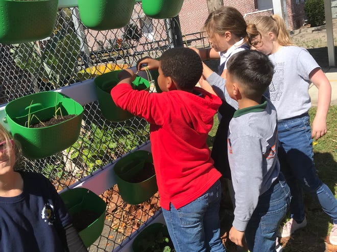 Kids love to garden, and there are many things they can learn by planting and cultivating seeds.