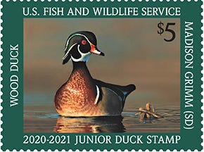 2020-2021 Junior Duck Stamp featuring a wood duck by Madison Grimm of South Dakota.