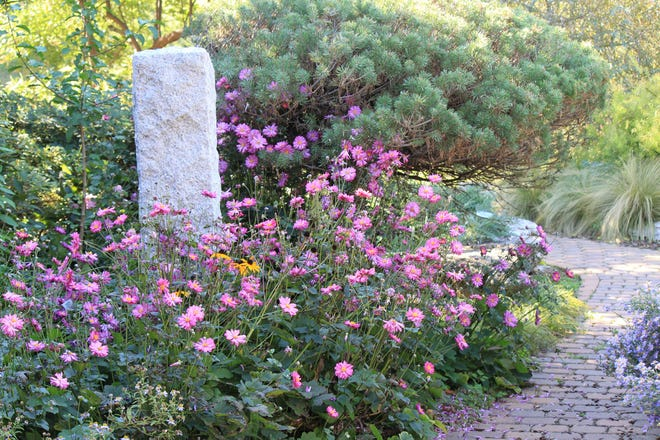 For more than two decades, a plant promotion program at Oklahoma State University has helped gardeners select plants, trees and shrubs that have proven to grow well in Oklahoma's diverse climate. The recently announced Oklahoma Proven selections for 2021 include the perennial Prinz Heinrich Japanese anemone.