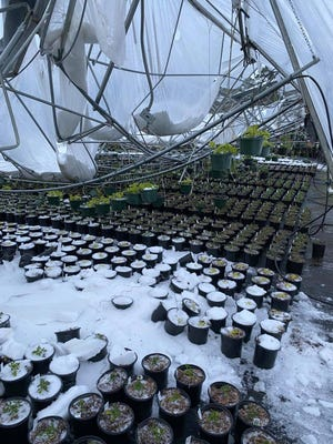 """Forest Hill Mayor Ann Jeter called the winter storm damage to plant nurseries in the area a """"devastation to the community."""""""