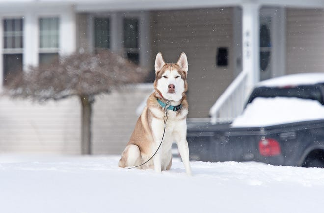 Ohio does not have any anti-tethering laws; people can legally leave their pets outside in the winter.