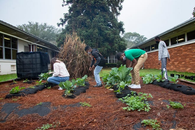 Students in Steve Sears's agricultural science class at Cobb Middle School check on their growing vegetable Thursday, Feb. 18, 2021.