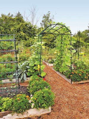 Incorporate trellises into garden plans so beans, peas, tomatoes and even squash can be trained to grow vertically.