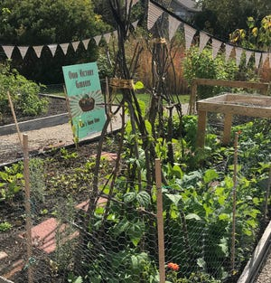 Raised beds allow gardeners to grow a large amount of vegetables in a relatively small space.