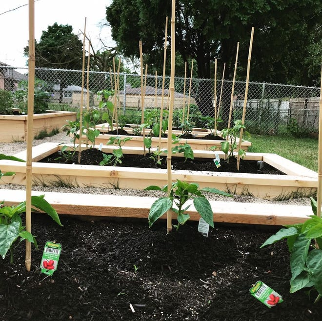 Raised beds provide an excellent environment for growing almost any vegetable crop.